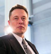 Elon Musk  Shutterstock