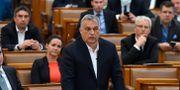 Ungerns premiärminister Viktor Orbán Zoltan Mathe / TT NYHETSBYRÅN