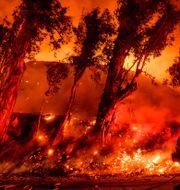 Bränderna härjade i Kalifornien under flera veckor. Noah Berger / TT NYHETSBYRÅN