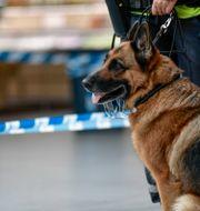 En polishund och en polis vid en misstänkt skjutning i Kista. Arkivbild.  Stina Stjernkvist/TT / TT NYHETSBYRÅN