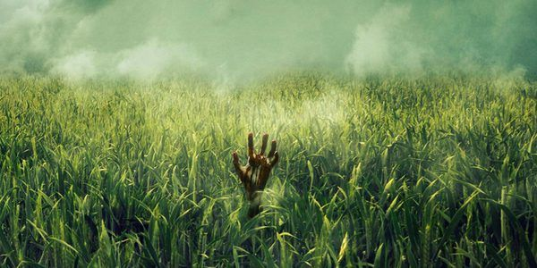 """""""In the tall grass"""". PRESS"""