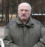 Belarus ledare Aleksandr Lukasjenko/Arkivbild Sergei Sheleg / TT NYHETSBYRÅN