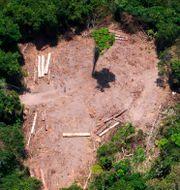 Illegal avverkning i Amazonas. RAPHAEL ALVES / AFP