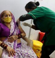 En kvinna i Mumbai får vaccin mot covid-19. Rafiq Maqbool / TT NYHETSBYRÅN