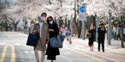 Ett par i munskydd promenerar i Seoul.  KIM HONG-JI / TT NYHETSBYRÅN