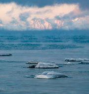 Svalbard. Arktis och Svalbard hör till de områden i världen som drabbats hårdast av klimatförändringarna. Jonas Ekströmer/TT / TT NYHETSBYRÅN