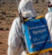 Besprutning av bekämpningsmedel sker medan Somaliabor ser på. Ben Curtis / TT NYHETSBYRÅN