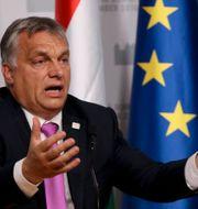 Viktor Orbán  Ronald Zak / TT NYHETSBYRÅN