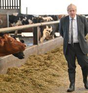Boris Johnson kampanjar i Wrexham i Wales.  Paul Ellis / TT NYHETSBYRÅN