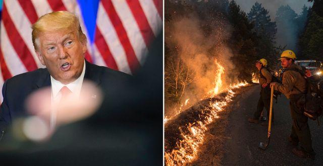 Trump. brandmän i Kalifornien. TT