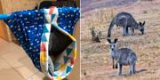 Mjuk tygpåse som donerats till Australiens kängurur. TT