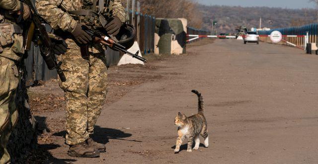 Ukrainska soldaterar i regionen den 2 november. Evgeniy Maloletka / TT NYHETSBYRÅN