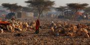 En kvinna i ett läger som skapats med anledning av torkan. Ben Curtis / TT / NTB Scanpix