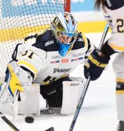 HV71 var en match från ett SM-guld i SDHL. Naina Helén Jåma/TT / TT NYHETSBYRÅN