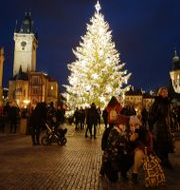 Julgran i Prag.  TT
