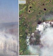 Jättebränderna i Sibirien. TT