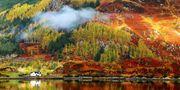 På hösten lyser de skotska högländerna upp i fantastiska färger. Shutterstock