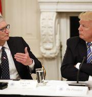 Cook ingår i Trumps teknologiråd. Från möte i Vita huset i juni i år. TT