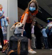 Illustrationsbild. United Airlines-kunder på väg till Hawaii.  Jeff Chiu / TT NYHETSBYRÅN