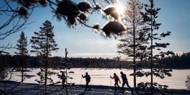 Bild från förra årets Vasalopp.  ULF PALM / TT / TT Nyhetsbyrån