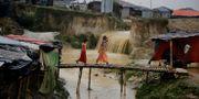 Flickor som flytt från Myanmar till Bangladesh. Arkivbild. Altaf Qadri / TT NYHETSBYRÅN