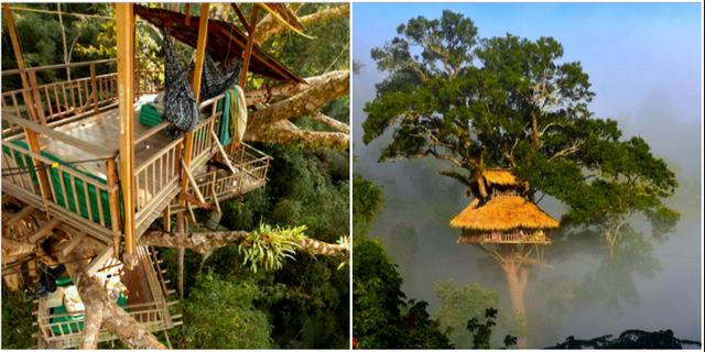 Känn dig fri som en fågel på världens högst belägna trädhotell. Gibbon Experience