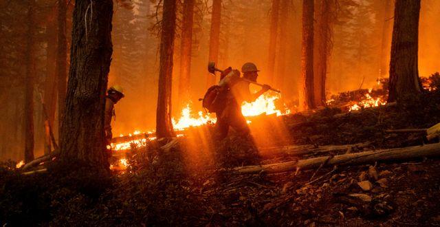 Branden i Plumas, Kalifornien, i måndags/Arkivbild. Noah Berger / TT NYHETSBYRÅN