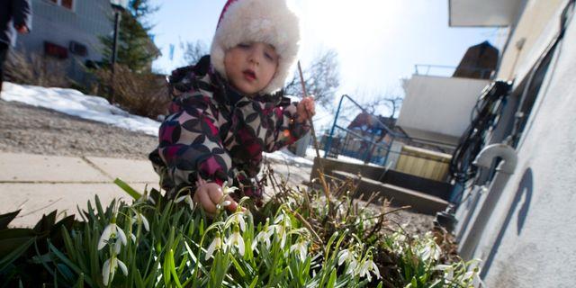 Arkivbild. Melissa, två och ett halvt år gammal, Enköping. FREDRIK SANDBERG / TT / TT NYHETSBYRÅN