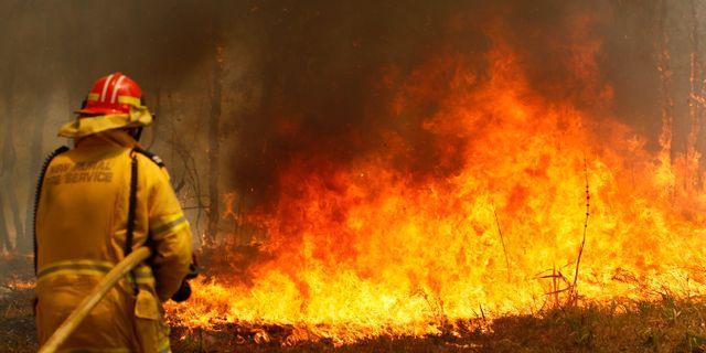 Brandman kämpar mot lågorna i östra Australien. Darren Pateman / TT NYHETSBYRÅN