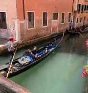 Ett par åker i en gondol i Venedig, 8 maj.  Karl Ritter / TT NYHETSBYRÅN