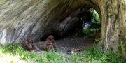 Statyer som avbildar neandertalare i Ciemna-grottan i Polen där kvarlevorna hittades.  Jan Jerszyński/Wikimedia Creative Commons