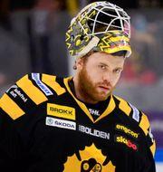 Markus Svensson i Skellefteåtröj Robert Granström/TT / TT NYHETSBYRÅN