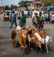 Handlare på en marknad i staden Gondar i norra Etiopien.  Ben Curtis / TT NYHETSBYRÅN