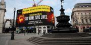 Piccadilly Circus i London. Matt Dunham / TT NYHETSBYRÅN