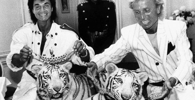 Roy Horn och Siegfried Fischbacher med två vita tigrar i samband med en föreställning 1987.  Scott McKiernan / TT NYHETSBYRÅN