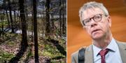 Skogen där flickan överfölls/Thomas Ahlstrand TT