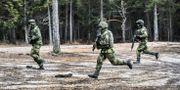 En militärövning på Tofta skjutfält i mars 2017. Tomas Oneborg/SvD/TT / TT NYHETSBYRÅN