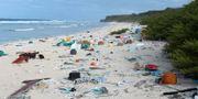 Skräp på en strand på Henderson Island.  Jennifer Lavers / TT / NTB Scanpix