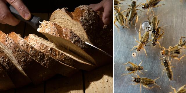 Bröd och syrsor. Arkivbilder.  TT