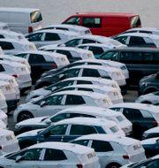 Volkswagen-bilar. Fredrik Hagen / TT NYHETSBYRÅN