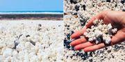 Popcornstranden på Fuerteventura trendar på sociala medier. Instagram @dardaridaria / Wikicommons