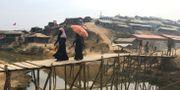 Kvinnor går över en bro i flyktinglägret Kutupalong i södra Bangladesh. STAFF / TT NYHETSBYRÅN