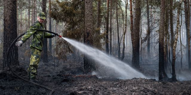Illustrationsbild från en skogsbrand i Småland förra året.  Anna Hållams/TT / TT NYHETSBYRÅN