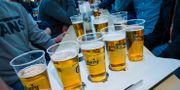 En grupp människor dricker öl. Arkivbild. Junge, Heiko / TT NYHETSBYRÅN