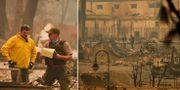 Skogsbränderna i Kalifornien. TT