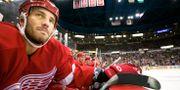 Andreas Lilja på bänken under sin tid i Detroit Red Wings. ANDREAS HILLERGREN / BILDBYRÅN