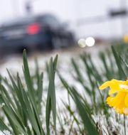 Snö i Malmö i förra veckan. Johan Nilsson/TT / TT NYHETSBYRÅN
