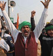 Bild från utkanten av New Delhi, 29 januari.  Manish Swarup / TT NYHETSBYRÅN
