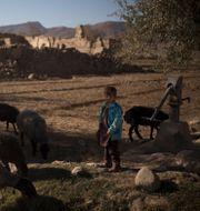 En pojke med en flock får i Afghanistan. Felipe Dana / TT NYHETSBYRÅN