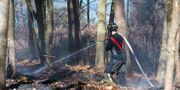 Skogsbrand i Olofström i Blekinge. Peo Möller / TT NYHETSBYRÅN